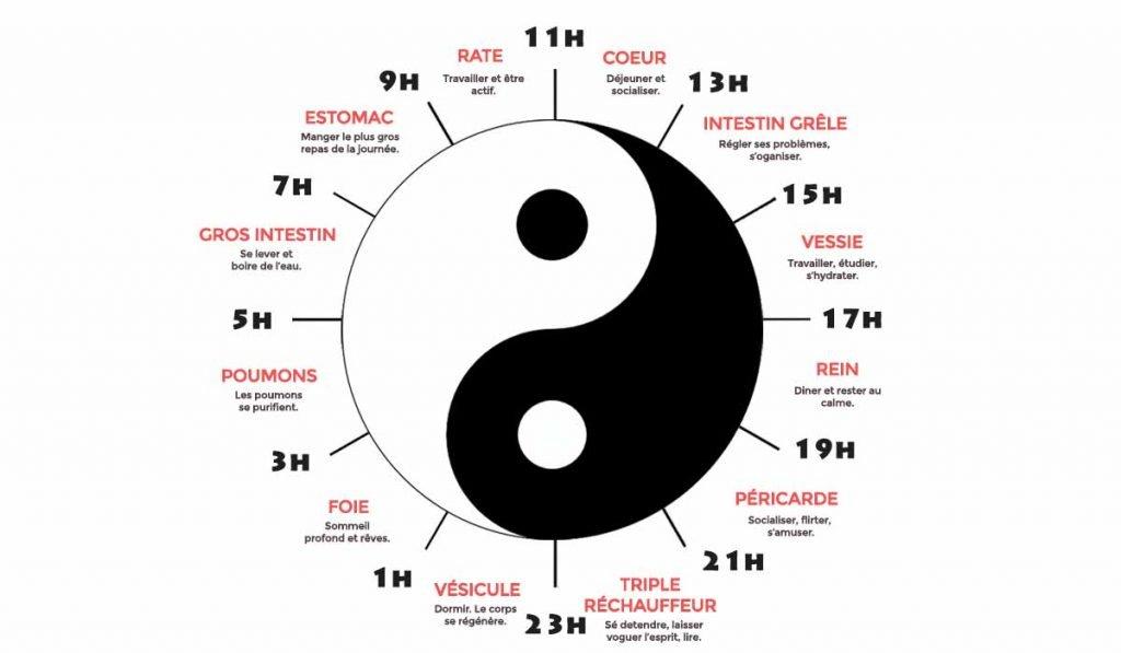 Horloge biologique selon énergétique chinoise